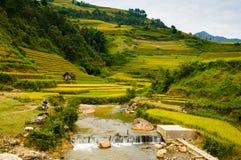 O arroz coloca em terraced de MU Cang Chai, YenBai, Vietname Imagens de Stock Royalty Free