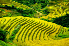 O arroz coloca em terraced de MU Cang Chai, YenBai, Vietname Fotos de Stock Royalty Free