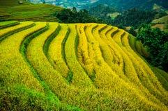 O arroz coloca em terraced de MU Cang Chai, YenBai, Vietname Imagem de Stock Royalty Free