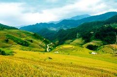 O arroz coloca em terraced de MU Cang Chai, YenBai, Vietname Imagens de Stock