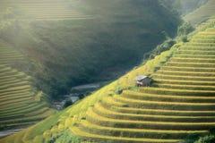 O arroz coloca em terraced de MU Cang Chai, YenBai, Vietname Arroz f fotografia de stock