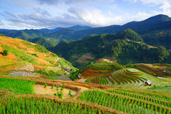 O arroz coloca no terraço na estação das chuvas em MU Cang Chai, Yen Bai, Vietname Fotografia de Stock Royalty Free