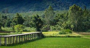 O arroz coloca a paisagem bonita Foto de Stock Royalty Free