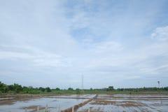 O arroz começa Fotos de Stock Royalty Free