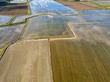 O arroz cultivou campos na opinião aérea de Italia foto de stock