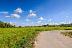 O arroz da estrada e do ouro arquivou sob o céu azul e a nuvem no tempo de colheita fotografia de stock