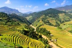 O arroz dos terraços coloca na montanha no noroeste de Vietname Foto de Stock Royalty Free