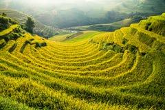 O arroz dos terraços coloca na montanha no noroeste de Vietname Foto de Stock