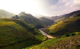 O arroz dos terraços coloca na montanha no noroeste de Vietname Imagens de Stock