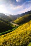 O arroz dos terraços coloca na montanha no noroeste de Vietname Fotografia de Stock Royalty Free