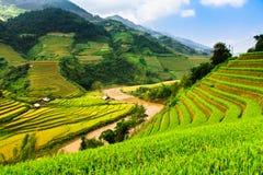 O arroz dos terraços coloca na montanha no noroeste de Vietname Imagem de Stock