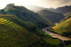O arroz dos terraços coloca na montanha no noroeste de Vietname Fotos de Stock Royalty Free