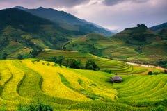 O arroz dos terraços coloca na montanha no noroeste de Vietname fotos de stock