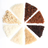 O arroz tailandês da carga é a criação dos eaperts e do Jap tailandeses do arroz Imagens de Stock Royalty Free