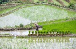 O arroz Terraced coloca no condado de Yuanyang, Yunnan, China Foto de Stock Royalty Free