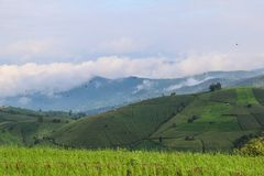 O arroz terraced verde coloca na manhã em PA BONGPIENG, mae Imagens de Stock