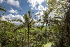 O arroz verde coloca na ilha de Bali, Jatiluwih perto de Ubud, Indonésia fotografia de stock