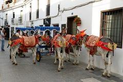 O asno decorado colorido chamou o Burro-táxi em Mijas, turista, Costa del Sol, Espanha Foto de Stock