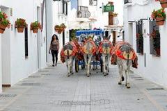O asno decorado colorido chamou o Burro-táxi em Mijas, turista, Costa del Sol, Espanha Fotos de Stock Royalty Free