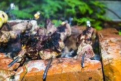 O assado do no espeto no carvão de pedra do forno dos espetos queimou-se Imagem de Stock Royalty Free
