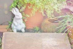 O assoalho de madeira acima tem um fundo de um coelho de pedra Potenci?metros de argila, frasco pequeno da ?gua das ?rvores alara foto de stock royalty free