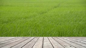 O assoalho de madeira com paisagem do arroz desengaça o balanço filme