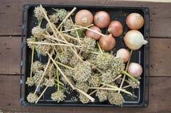 O aumento nos preços de cebolas secas, aumento excessivo nos preços de cebolas secas, Fotografia de Stock Royalty Free