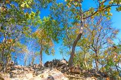 O autumm de surpresa no ponto de vista sae de árvores amarelas e alaranjadas fotos de stock