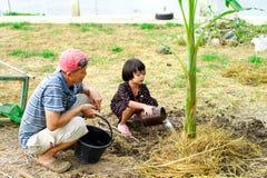 O avô e a neta crescem a árvore de banana junto em t imagem de stock