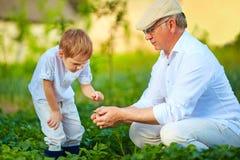 O avô explica o neto a natureza do crescimento vegetal Fotos de Stock Royalty Free