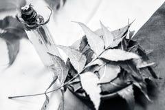 O Azadirachta indica, Neem com suas folhas e o óleo em uma garrafa em uma argila rolam para cuidados com a pele Imagem de Stock Royalty Free