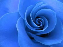 O azul levantou-se Foto de Stock Royalty Free