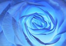 O azul levantou-se Imagens de Stock