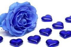 O azul levantou-se com corações Fotografia de Stock
