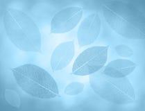 O azul sae do fundo Imagens de Stock Royalty Free