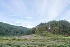 O búfalo selvagem vive na parte 10 da floresta foto de stock royalty free