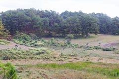 O búfalo selvagem vive na parte 10 da floresta imagens de stock royalty free