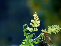 O baground verde da folha imagem de stock