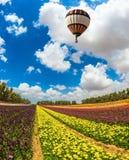 O balão brilhante grande Fotografia de Stock
