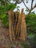 O bambu é colocado no jardim fotos de stock