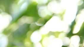 O bambu borrado sae com a luz solar, chiangmai Tailândia filme