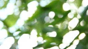 O bambu borrado sae com a luz solar, chiangmai Tailândia video estoque