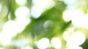 O bambu borrado sae com a luz solar, chiangmai Tailândia vídeos de arquivo