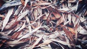 O bambu caído sae do fundo, fundo do estilo do vintage do outono, conceito do outono, conceito abstrato Imagem de Stock Royalty Free