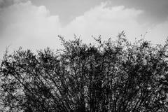 O bambu e a nuvem Imagens de Stock
