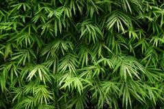 O bambu folheia teste padrão para o fundo imagens de stock