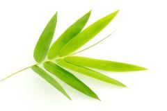 O bambu fresco deixa a beira isolada no fundo branco, botânico Fotos de Stock Royalty Free