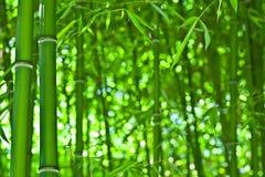 O bambu gosta do zen