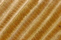 O bambu sae do fundo Imagem de Stock