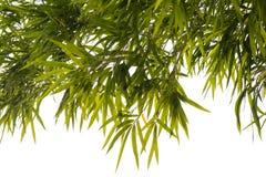 O bambu sae do isolado do fundo Foto de Stock